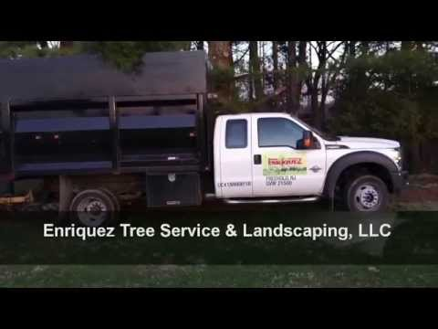 Lawn Care Freehold NJ | (732) 333-6478