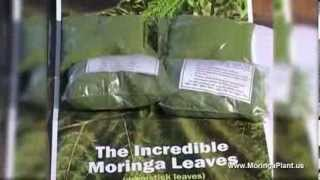 Moringa Oleifera - Documentary about Moringa Superfood