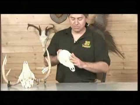European Mount- Learn How To Skull Mount A Deer