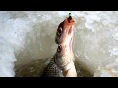 видео рыбалка в сургуте