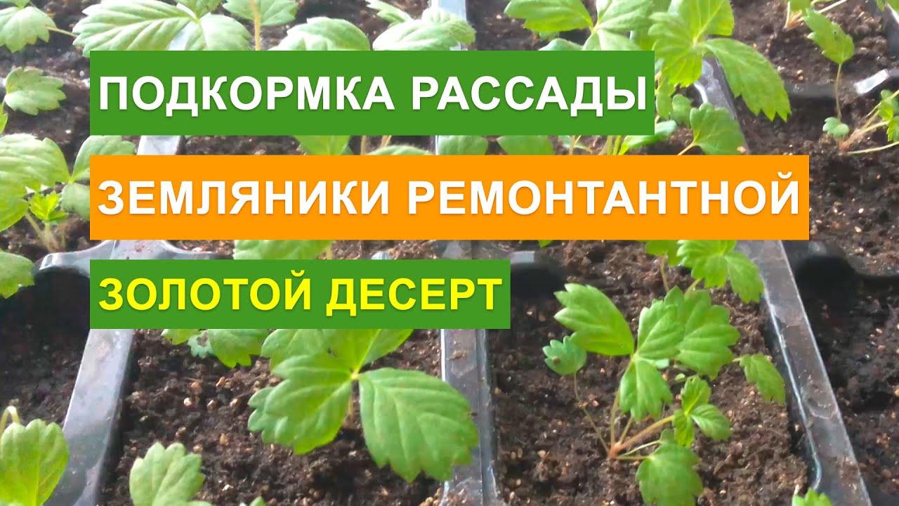 Ремонтантная земляника выращивание и уход обрезка 79