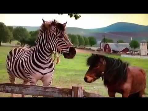 racing stripes and eyewitness horse music video youtube