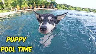 Puppy Swimming First Time
