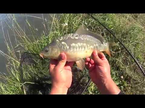 Рыбалка на фидер (ДР)