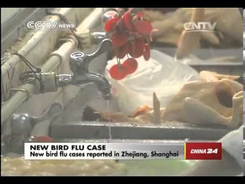 New bird flu cases reported in Zhejiang  Shanghai