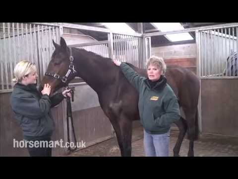 How to assess an ex race horse for feeding