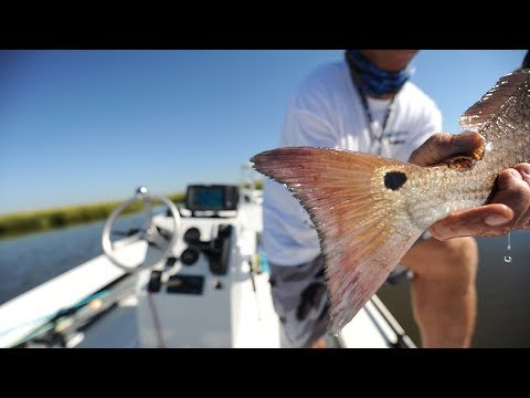 Bodacious Bulls - BIG REDFISH in Louisiana marsh