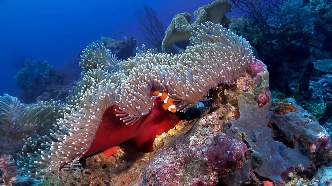 """""""Anemonefish: Nature's Aquarium"""" DVD ~ ocean scenes ..."""