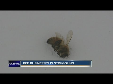 Decreasing bee populations causing slow collapse to industry