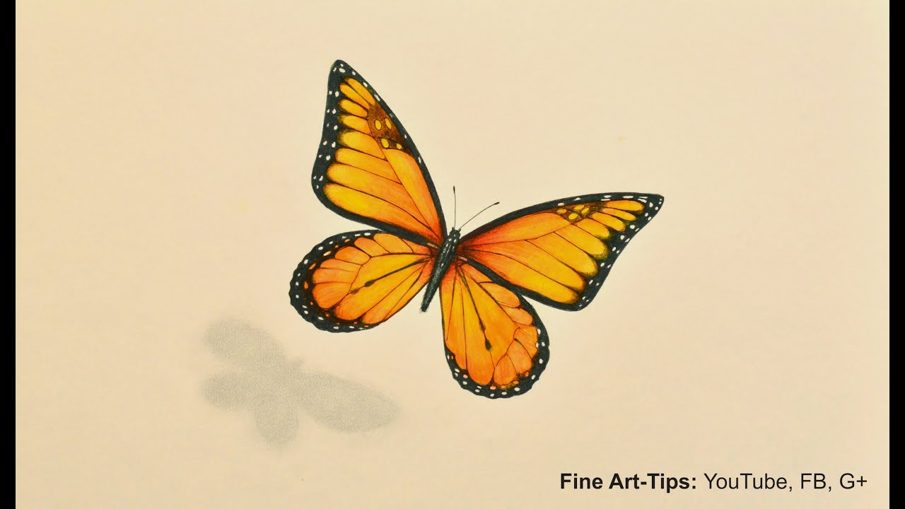 Monarch butterfly wing drawing