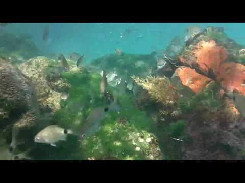 Snorkeling Sebastian Inlet Jetty 8 2 10
