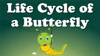Life Cycle of a Butterfly | #aumsum #kids #science #education #children