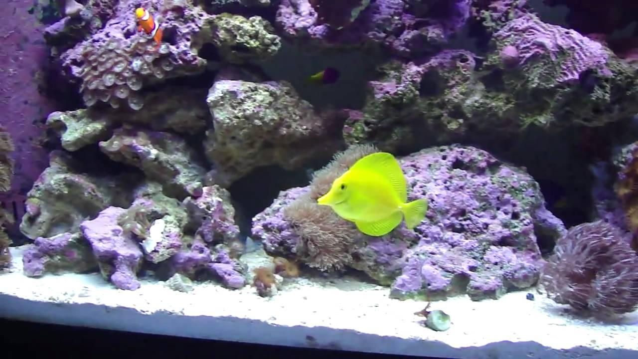 55 Gallon Reef Aquarium Setup Youtube