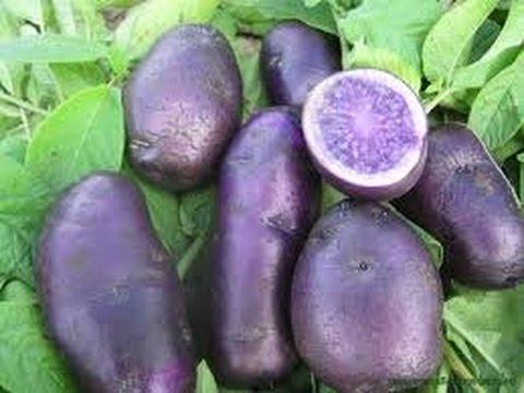 Картофель Фиолетовый.