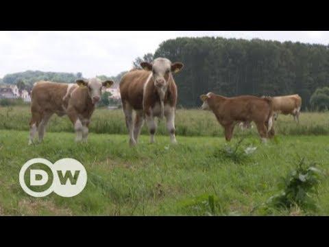 Weniger Belastungen durch künstlich erzeugtes Fleisch? | DW Deutsch