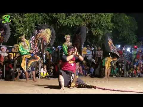 Full Perang Celeng Rogo Samboyo Putro terbaru