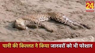 Balrampur : पानी की किल्लत ने किया जानवरों को भी परेशान