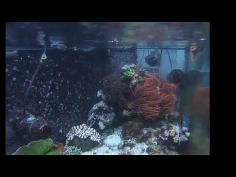 Dinchak 180g Salt Water Aquarium video