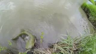 Spinning wels catfish
