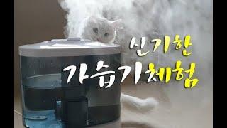 신기한 가습기 체험! 고양이반응이 귀여워요!!