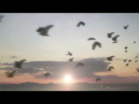 Hale - See You Lyric Video