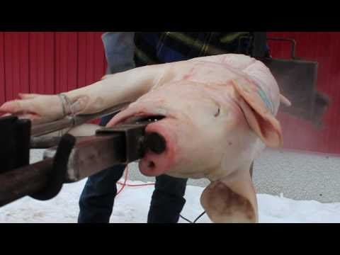 Danner's 1st PIG ROAST!!