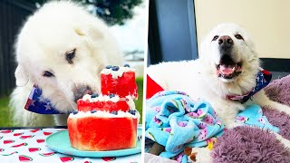 KODA'S 7th BIRTHDAY PARTY! (Super Cooper Sunday #258)