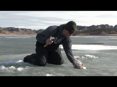 Pike tries to bite fisherman at Fort Peck Montana ice fishing withJawJackers. JawJacker Video