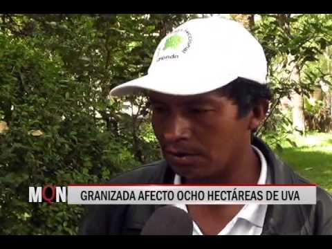 02/03/2015-19:34 GRANIZADA AFECTO OCHO HECTARIAS DE UVA