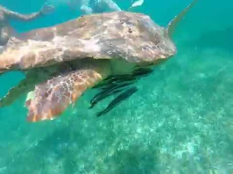 When Sea Turtles Attack