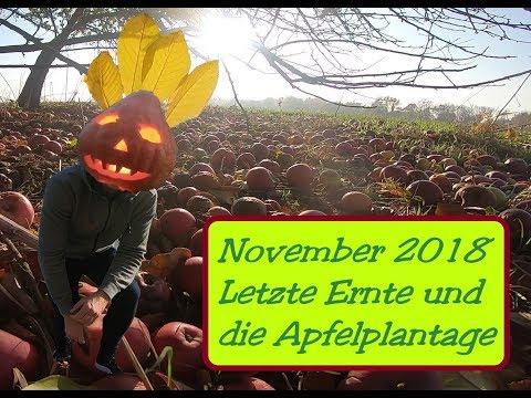 November | Garten | 2018 und die alte Apfelplantage