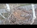 Harmar Bald Eagles Live Stream