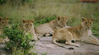 Wonderful Africa ~ Csodálatos Afrika