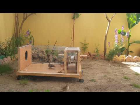 Homemade Sparrow Trap, To Cache All Birds !