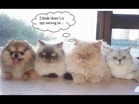 Funny Kittens Video