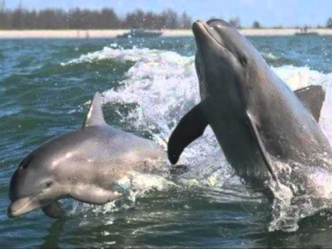 Prince - Dolphin