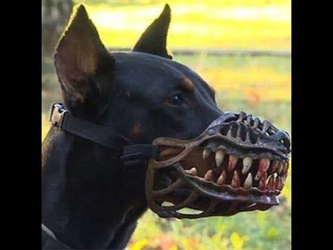 10 те най-опасни породи кучета