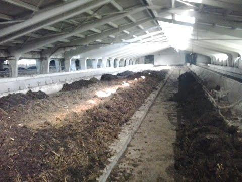 Промышленное выращивание червей 58