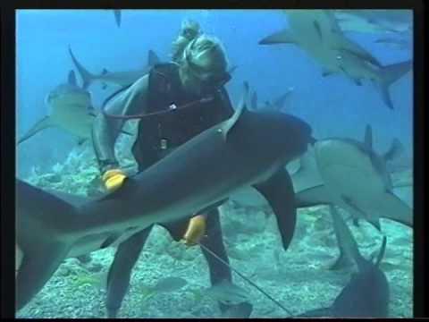 """Bahamas Shark Dive 2005"""