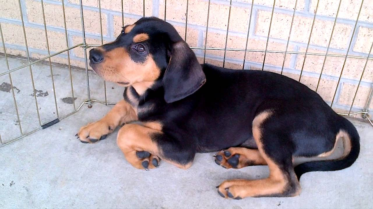 Adopt a Pet  Bollinger County Stray Project