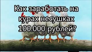 Как заработать на курах несушках 100 000 рублей?  Бизнес план