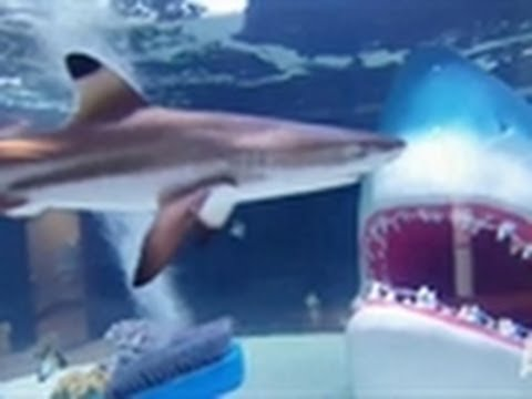 Tanks Tanks Tanks Tanked – Shark Tank Video