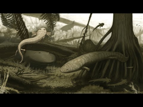 Anfíbios e réptil da Era Paleozoica são encontrados no Nordeste