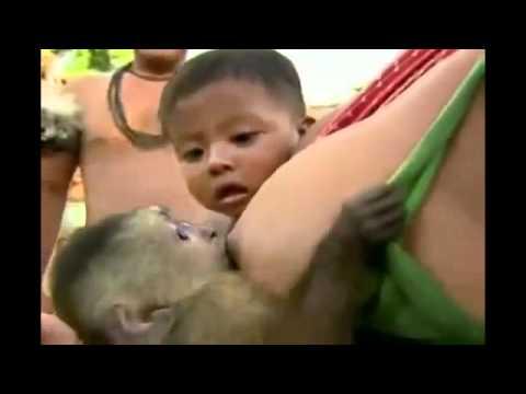mujer da de amamantar a un mono