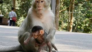 You Will Drop Your Tear ! WATCHING Baby Kidnapped and Strongly Pushing, Oh Very Pity Baby Monkey#372