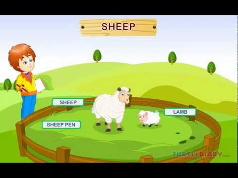 Learn all about the Farm Animals at www.turtlediary.com