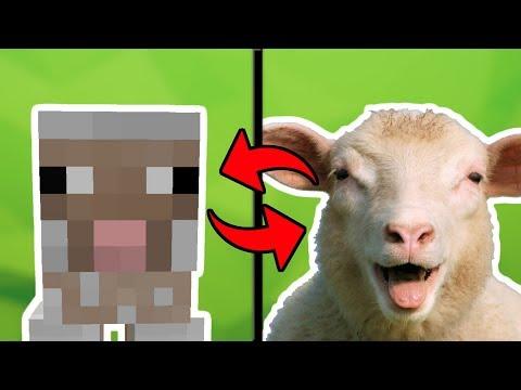 ТОП 5 САМЫХ ТУПЫХ МОБОВ В МАЙНКРАФТЕ [ТопПВП Minecraft]