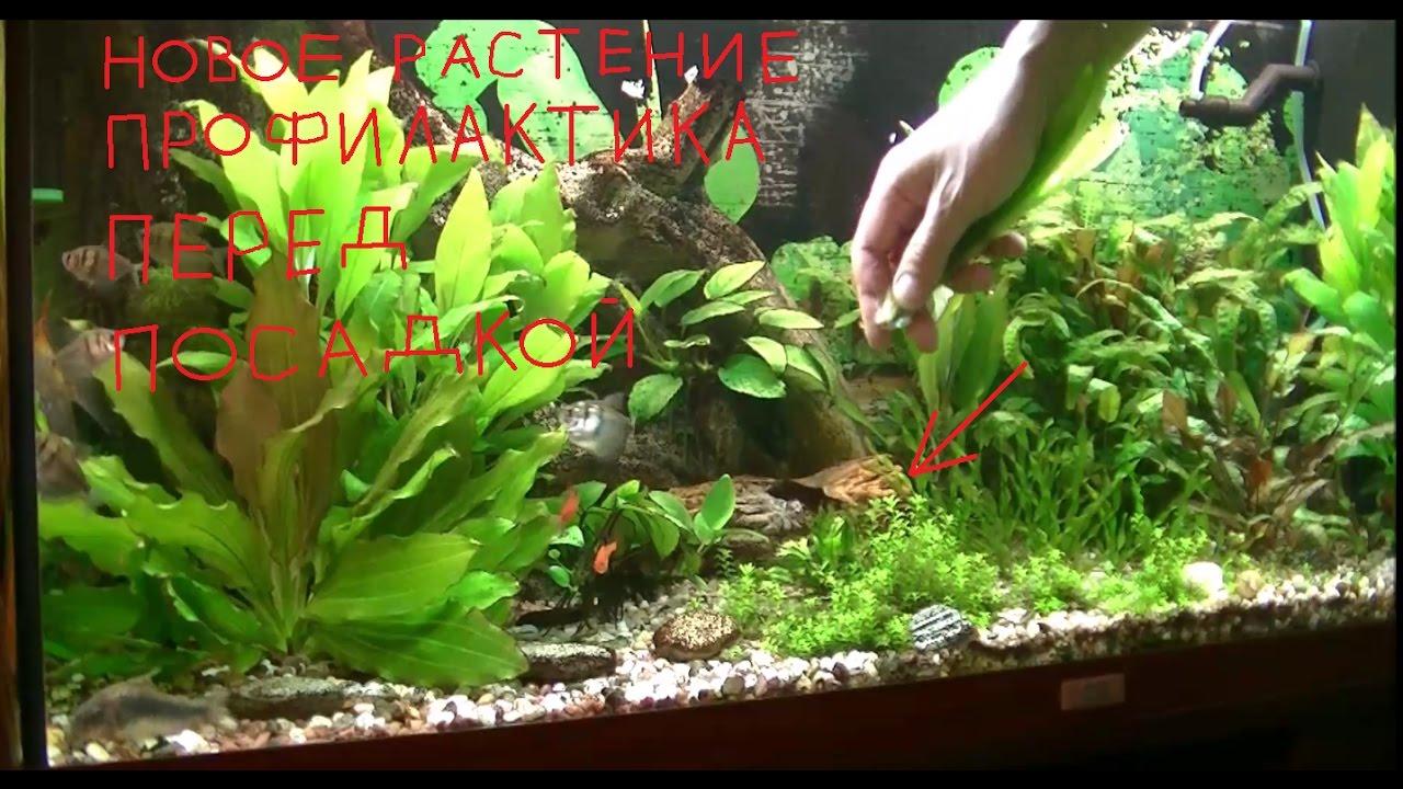 Растения в аквариуме сажают в 515