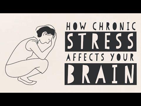 [TEDxEd] Как стресс действует на мозг