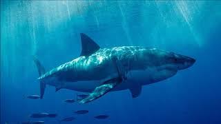 12ft Great White Shark Found Bitten In Half    BREAKING NEWS!